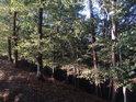 Prudký lesní sráz zpevňují buky a borovice.