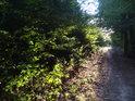 Cesta dole na Květnici ze severovýchodní strany od Lomničky.