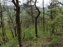 Přes zatím nenarostlé listy stromů je možné vidět na krajinu pod Lebeďákem.