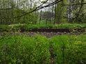 Znatelná pěšina k železniční trati pokračuje k říčce Bělá.