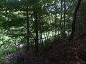 Pohled přes mladé stromy ze svahu s cestou v pozadí.