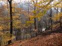 Podzimní pohled ze svahu k silnici a Svitavě.