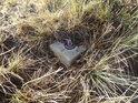 Poněkud poničený plastový mezník v trávě na Medlánecké skalce.