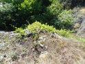 Pohled dolů z na Medlánecké skalky.