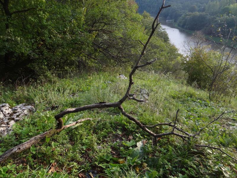 příklad uschlé větve