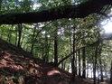 Pěšina přes chráněné území vede mimo jiné pod ulomeným kmenem, zaklíněným o živý strom.