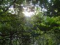 Slunce mezi dubovými listy nad Brněnskou přehradou.