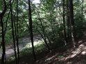 Zalesněný svah na levém břehu řeky Svratky.