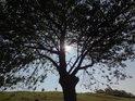 Třešeň stíní slunečnímu svitu o babím létě.
