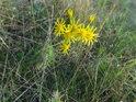 Květena na Netopýrkách.