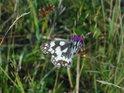 Úžasný motýl nás nenech na pochybách o nekonečné kráse naší přírody, třeba téměř na území velkého města.