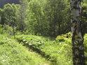 Přírodní rezervace mezi městy Hanušovice a Jeseník