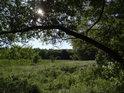 Pod vrbovou větví je vidět pravobřežní niva Svratky.