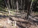 Prudký východní svah se smrkovým lesem.