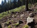 Zavadající lesní suťové pole.