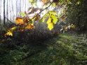 Lužní Slunce za podzimními listy dubu.