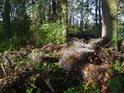 Naházené role drátěného plotu žádnému lesu čest nedělají.