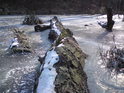 Lávku přes bažiny tvoří padlý strom, ale má se jít i vedle ní, led je silný dost, i když při chůzi zlověstně praská.