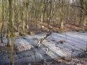 Pňovský luh má co chvíli nějakou tůni, nějaký zbytek staré řeky.