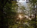 Večerní Slunce prosvětluje bukové listy.
