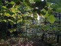 Různé odstíny zeleně ve večerním lese.