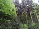 Nejčastějšími stromy jsou tu smrky a buky.