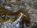 Slatinná barva lesního potoka.