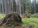 Paseka po zpracování dřeva.