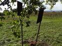 Vinohrady nahoře na kopci za dvojicí úředních cedulí.