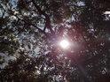 Slunce prosvítá mezi listy stromů.