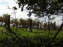 Vinohrad pohledem z pod větví stromů.