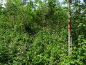 Vnější hranice chráněného území označená na mladém jasanu.