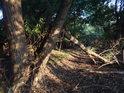Vrby jsou častými lužními stromy, které vydrží i delší sucho.