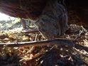 Choroš na vrbovém kmeni na dno vyschlé tůně padlém.
