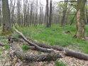 Pozvolna se rozkládající padlé větve stromů.