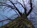 Na hrázi je vždy možné pohlédnout do korun stromů.
