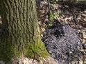 Logickým vysvětlením těžko popsatelná hromádka popela uprostřed lesa, téměř 100m od nejbližší cesty.