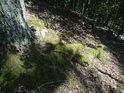 Mechem obrostlé obnažené kořeny akátu.