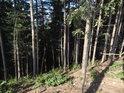 Počátek smrkového lesa v prudkém svahu.