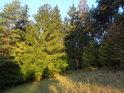 Růžek louky s cedulí chráněného území Švařec.