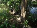 Úpatí javoru na pravém břehu řeky Svratky.