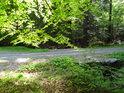 Zpevněná horská cesta z pod bukových listů.