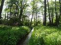 Náhon z náhonu. Přesněji rybniční náhon z náhonu Alba zásobuje rybníky v severozápadní části Týniště nad Orlicí.