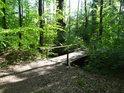 Dřevěná lávka přes náhon Alba.