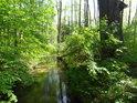 Lesní úsek náhonu Alba.