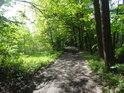 Oblouk lesní cesty.