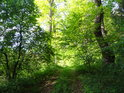 Zanikající lesní cesta.