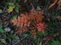 I uvnitř lesa to na podzim hraje barvami.