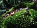 Mechem obrostlý kámen s loňskými listy na slunečním ostrůvku.