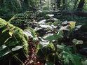 Sluneční paprsek si našel cestu až na bylinné lesní patro.